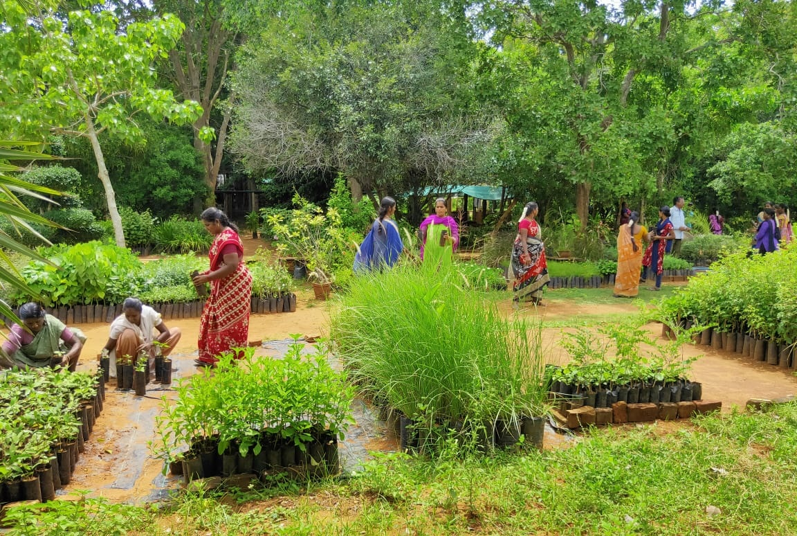Practical session on Nursery Maintenance at Aurovillle Botanical Garden