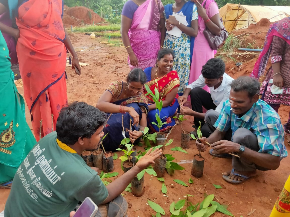 Hands on training on grafting techniques