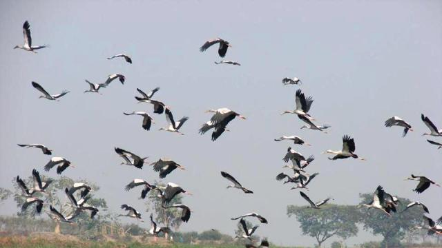 Jharkhand set to become paradise for bird watchers