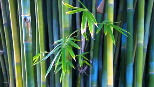 Mumbai gets its first botanical park for bamboo cultivation